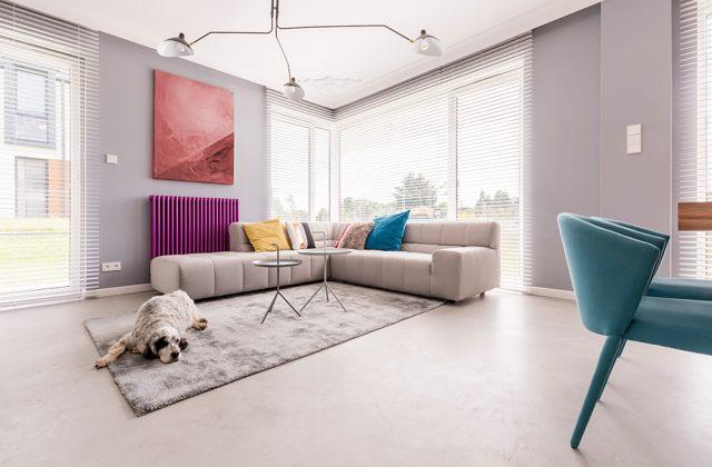 dog-in-a-house-interior-P6D5GAZ